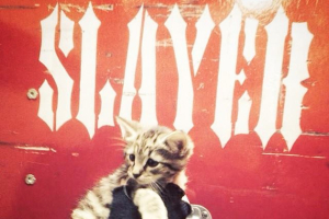 SLayer-kitty